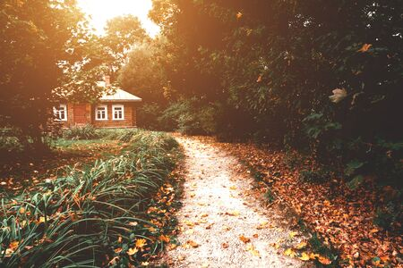 Wooden house with road with orange and yellow leaves in forest during autumn