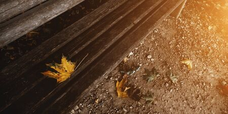 Autumn countryside landscape. Autumn yellow leaves. Hello autumn concept. Maple leaf laying on wooden bench