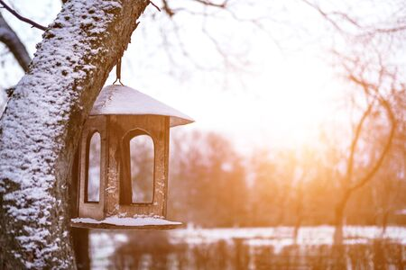 Wooden bird feeder hanging on tree in winter park on sunny day. DIY bird table in sunlit garden. Natural background with space for text. Helping avian friends on cold season. Environmental care