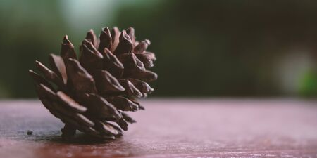 Fir cone on table surface close up view. Detailed natural pinecone on blurred background with copyspace. Traditional new year holiday, christmas celebration, winter season nature symbol Stok Fotoğraf