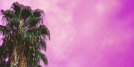 Bright green tropical palm trees with neon pink sky on background. Floral and spa vacation backdrop concept. Web banner for hotel, greeting card idea