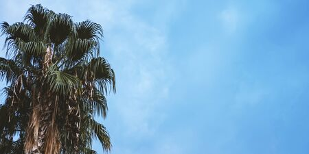 Bright green tropical palm trees with blue sky on background. Floral and spa vacation backdrop concept. Web banner for hotel, greeting card idea Stok Fotoğraf