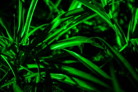 Plant branches with green leaves close up view. Natural environment, ecology, lush forest trees foliage. Beautiful botanical background with dense vegetation. Illuminated greenery at nighttime
