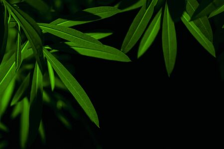 Plant branches with green leaves close up view. Natural environment, ecology, lush forest trees foliage. Beautiful botanical background with copyspace. Illuminated greenery at nighttime