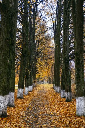 Autumn countryside landscape long road. Autumn yellow leaves. Hello autumn concept. Imagens
