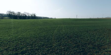 Green field nature background with copyspace. Climate change concept. Stock photo.