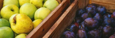 Banner of exotic summer diet. Tropical organic fruit in crate. Plam, pear delivery . Autumn harvest. Stock photo. Imagens