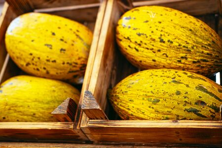 Exotic summer diet. Tropical organic fruit in crate. Melon delivery . Autumn harvest. Stock photo.