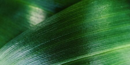 Macro green leaf with drop of dew. Nature minimalistic banner background with copyspace. Stock photo.