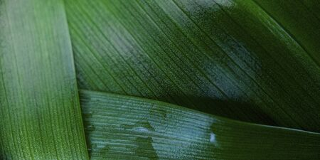 Macro green blurred leaf with drop of dew. Nature minimalistic banner background with copyspace. Stock photo.