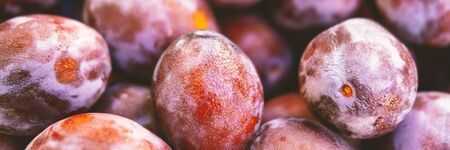 Banner of exotic summer diet. Tropical organic fruit. Plum delivery. Autumn harvest. Stock photo. Imagens