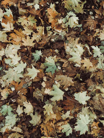 Yellow leaves on ground