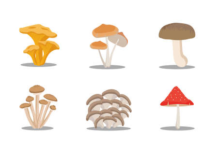 Wild collection of assorted edible mushrooms and toadstools in cartoon style