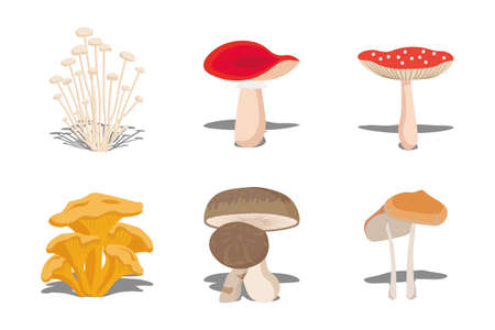 Mushroom set of vector illustrations in flat design. Colorful forest wild collection of assorted edible mushrooms