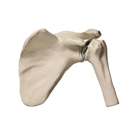 anatomic study tool of an human shoulder replacenment Stock Photo