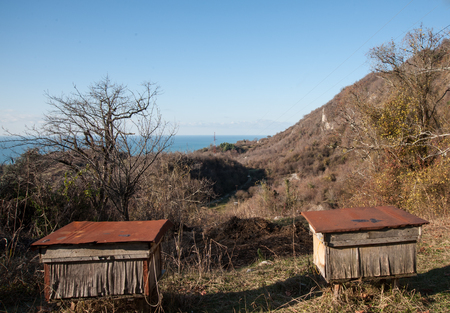 Bee hives on the homestead in Abkhazia