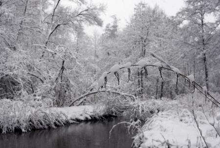 겨울 풍경입니다. 강물에 나무를 코팅하는 눈 겨울 공원에서 은행입니다.
