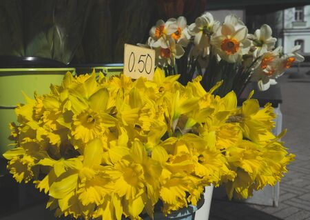 Bouquet of yellow daffodils in a flower shop