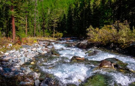 Mountain river in the forest in the Altai Republic.