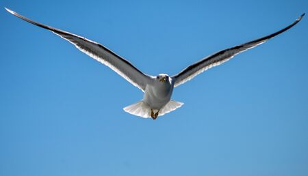 White sea gull in the background of blue sky.