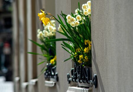 White and yellow daffodils on a window of a house in an old European city. 版權商用圖片