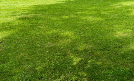 Freshly cut green lawn grass in a city Park on a bright Sunny day. 版權商用圖片