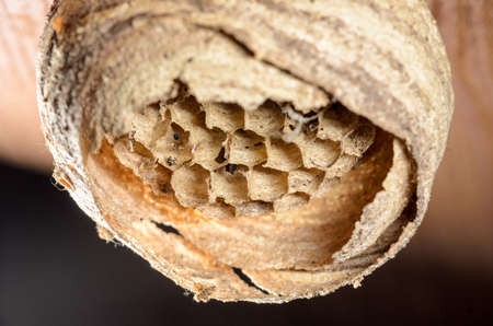roommates: Abandoned wasp nest on a wooden ceiling