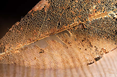 branching: Skeleton of a Crumbled Book leaf on a light brown wooden board