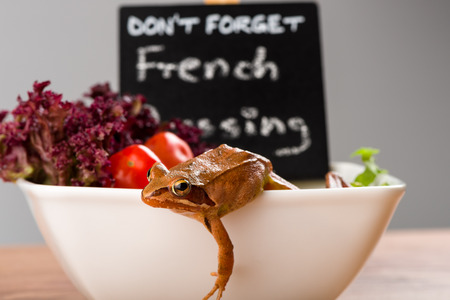 rana: Frog on the run, escaping from a french salad plate. There is a sign with the inscription: Don´t forget French Dressing. It´s a spring frog (Rana dalmatina). Stock Photo