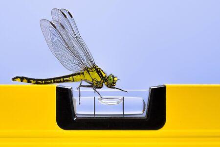 Dragonfly (Plasrombout, plasrombout, Westliche Keiljungfer) aangetrokken door een gele waterpas Stockfoto
