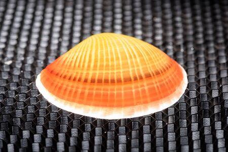 structured: Glowing shell en un fondo estructurado negro con patr�n de panal.