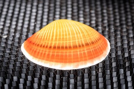 Glowing shell on a black structured background with honeycomb pattern. Stock Photo