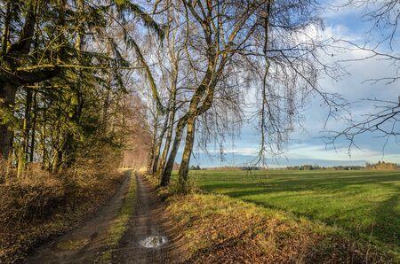 alongside: German landscape with birch trees alongside a path. Stock Photo
