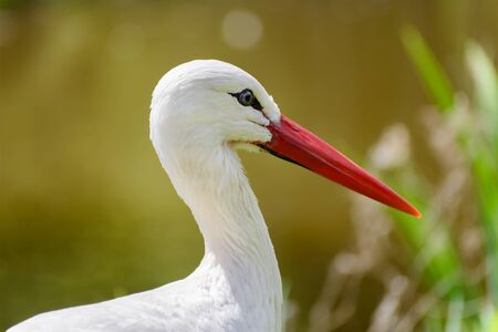 close up eyes: Close up of a white crane with blue eyes