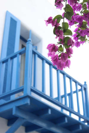 bougainvillea flowers: Pink bougainvillea flowers Against the backdrop of a blue wooden balconies.