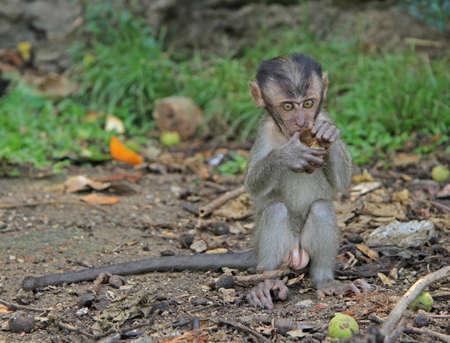 nearly: baby macaque nearly Batu caves, Kuala Lumpur Stock Photo