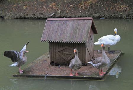 lake dwelling: floating small house for birds on the pond