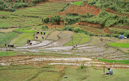pa: people are cultivate the paddy field, Sa Pa, Vietnam