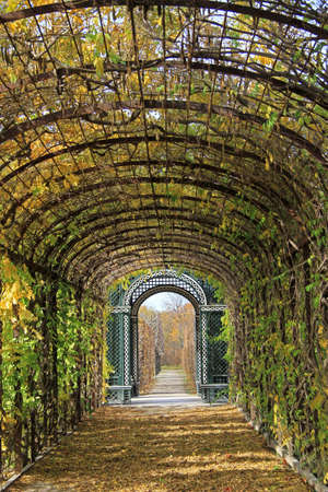 corridors: The plant corridor in park of Vienna, Austria Stock Photo
