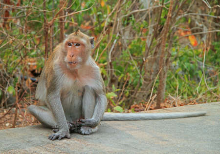 monkey nearly entrance to Khao Luang cave, Thailand