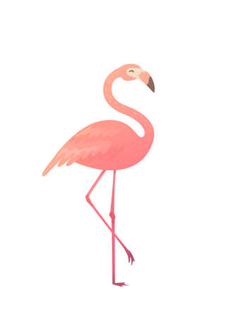 Vector illustration of a pink flamingo. Flamingo African tropical beauty of exotic animals. Sleek design simple.