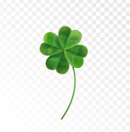 Four Leaf Clover on a transparent background. Vector illustration for the holiday of St. Patrick. Green clover in a realistic style. Illustration
