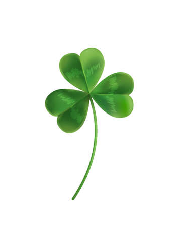 st  patrick's day: Three sheets realistic lucky clover leaves on a white background. Vector illustration. Green clover for St. Patricks Day.