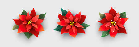 赤いクリスマス ポインセチア花に分離ホワイト