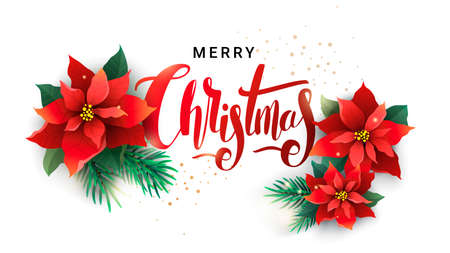 Christmas design of fir branches and poinsettia