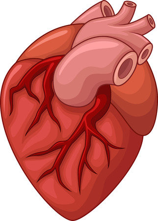 superior vena cava: Human heart cartoon illustration
