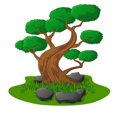 bonsai tree: Beautiful bonsai tree isolated