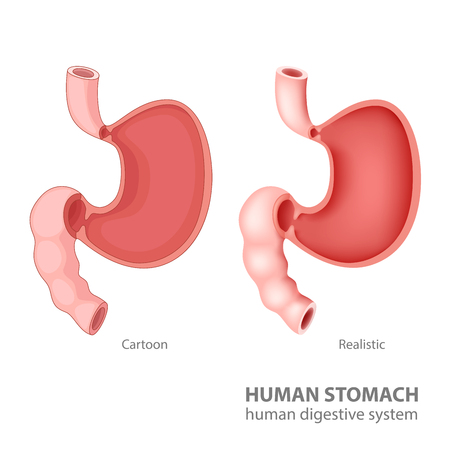 sphincter: Human stomach in cartoon and realistic