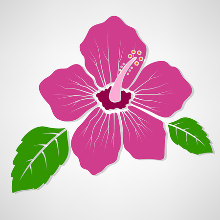 flower concept: Hibiscus flower concept illustration