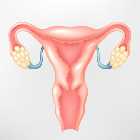 ovary: Female reproductive system